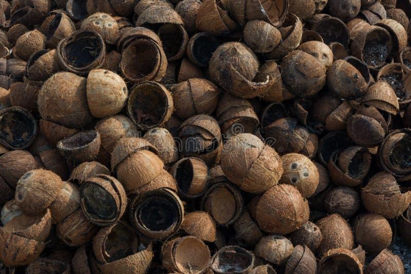 Rozsypisko starego brązu suchy kokosowy ` s struga przy tropikalną wyspą obraz stock