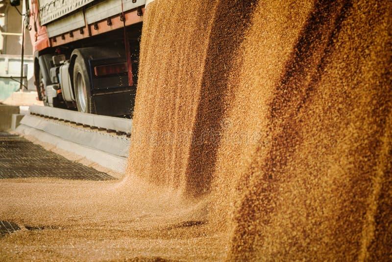 Rozsypisko właśnie zbierająca kukurudza wśrodku zbiornika Adra polany f zdjęcie royalty free