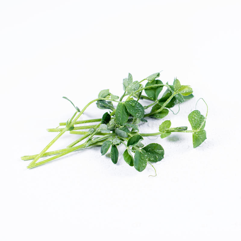 Rozsypisko zielony groch kiełkuje, mikro zielenie na białym tle Zdrowy łasowania pojęcie świeży ogrodowy produkt spożywczy organi obrazy royalty free