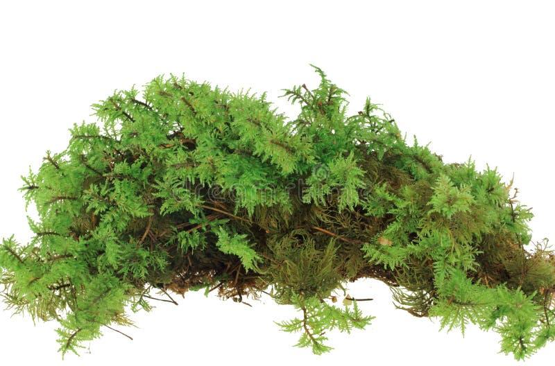 rozsypisko zielony mech zdjęcia stock