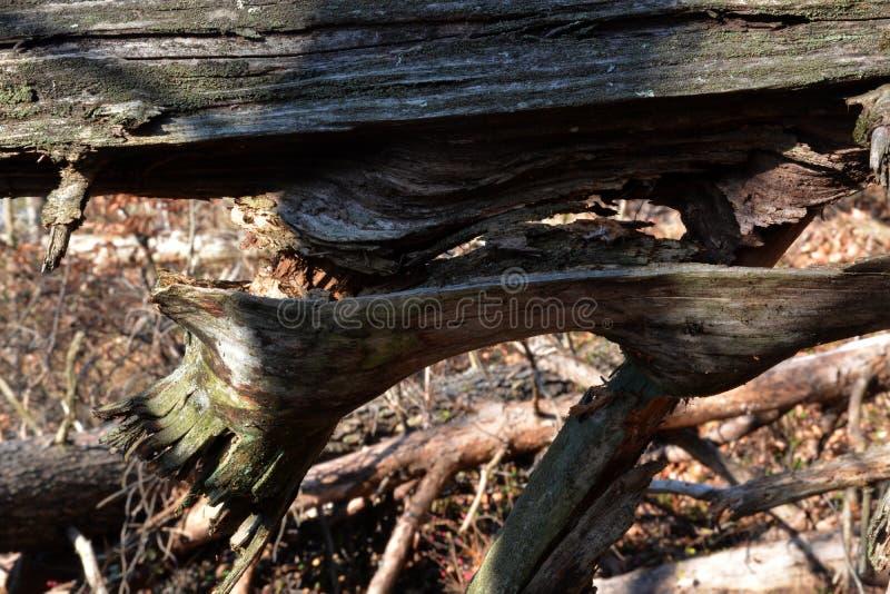 Rozszczepiony drzewny szczegół zdjęcia stock