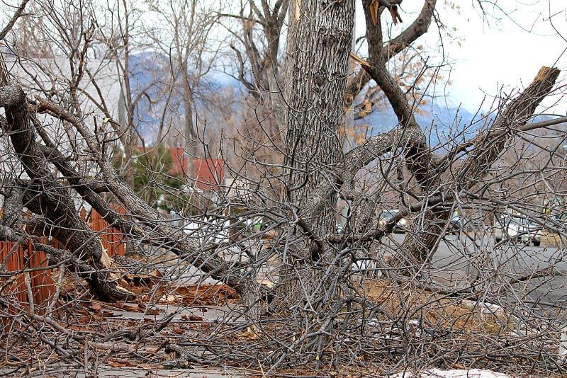 Rozszczepiony drzewo fotografia royalty free