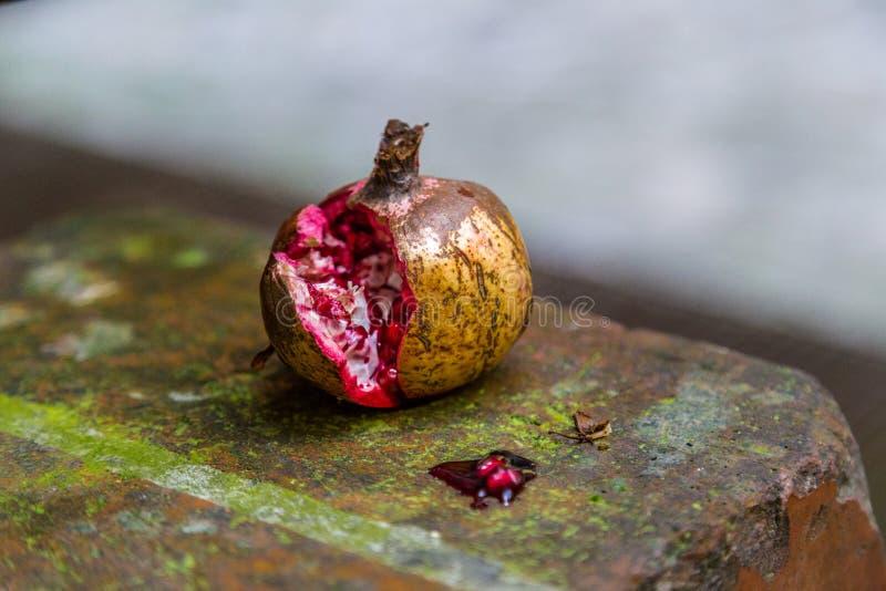 Rozszczepiony granatowiec na piżmowej ścianie zdjęcie royalty free