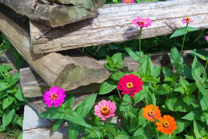 Rozszczepiony Sztachetowy ogrodzenie i kwiaty fotografia royalty free