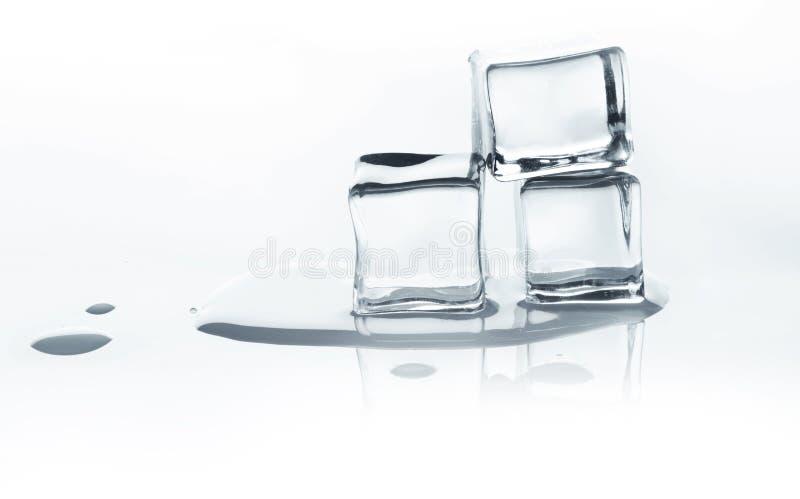 Roztapiające kostki lodu z odbiciem na bielu zdjęcie royalty free