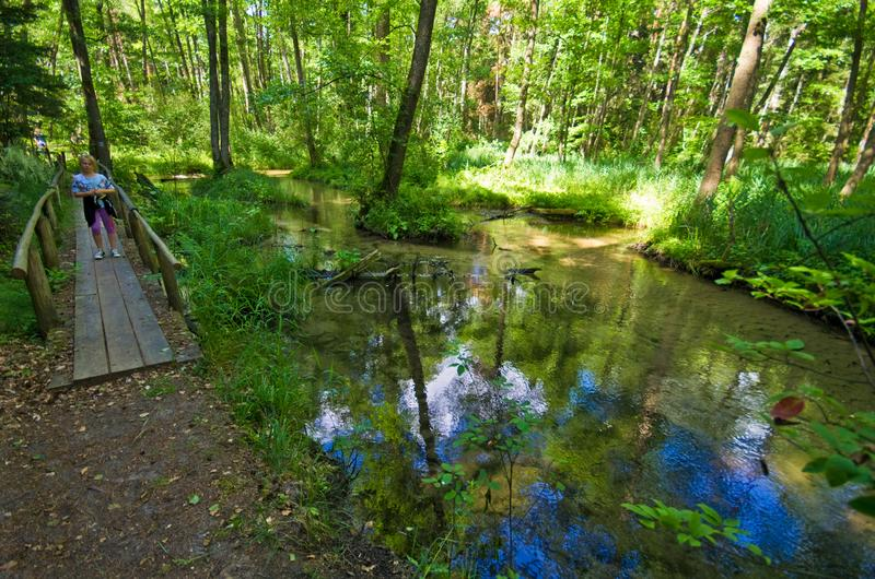 Roztocze Polen, trän och bred vinkel för skogar royaltyfri fotografi