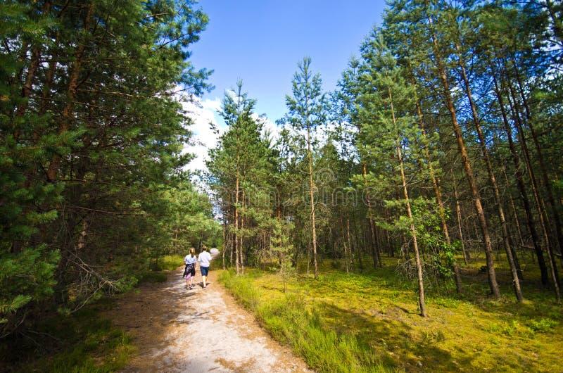 Roztocze Polen, trän och bred vinkel för skogar arkivfoto