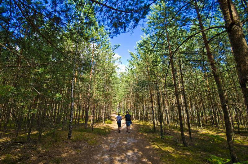 Roztocze Pologne, bois et forêts grands-angulaires images libres de droits