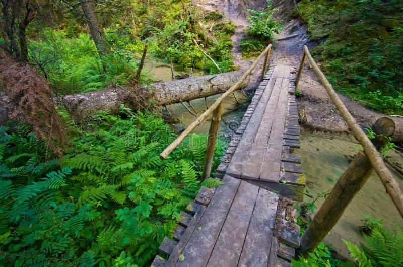 Roztocze Polska, drewna i lasu szeroki kąt, obrazy stock