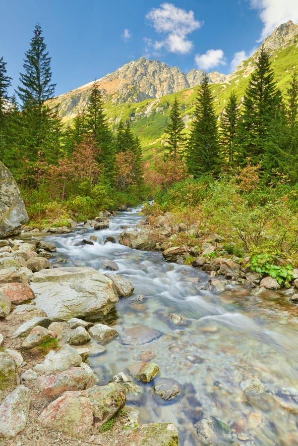 Roztoka小河 高Tatras,喀尔巴阡山脉 免版税库存照片