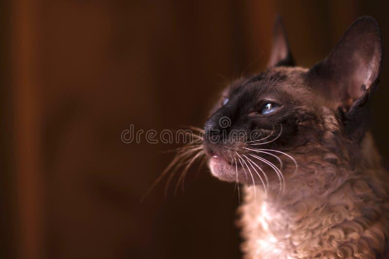 Rozważny kot obraz royalty free