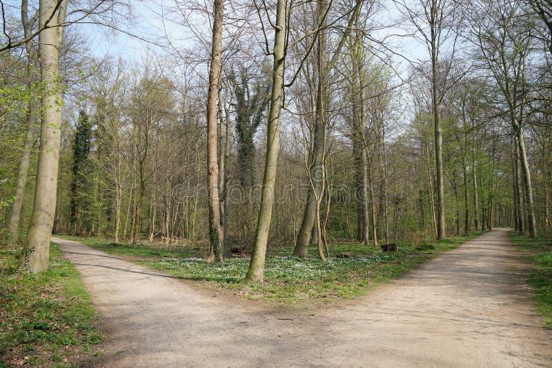 Rozwidlenie w lasowej ścieżce obrazy royalty free