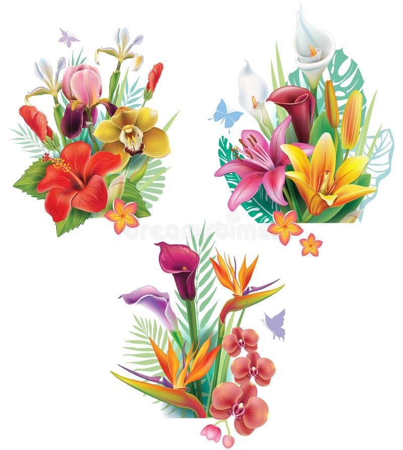 Rrangements do  de Ð das flores tropicais ilustração royalty free