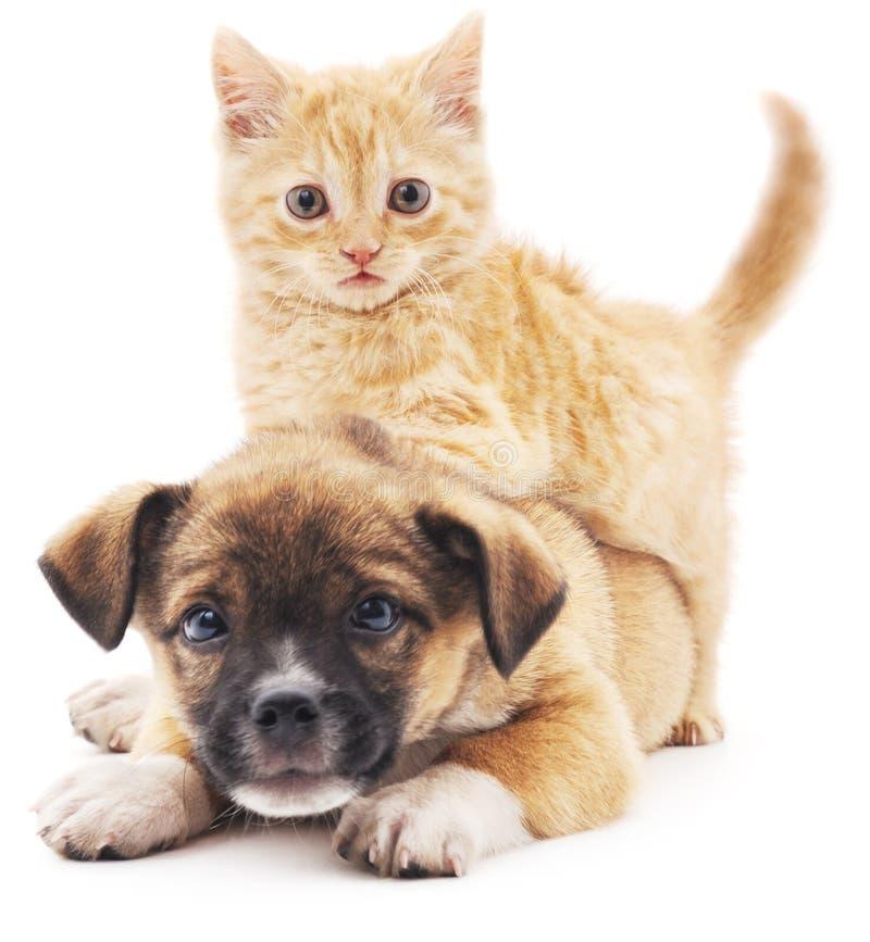 Rred-Kätzchen im Welpen stockfoto