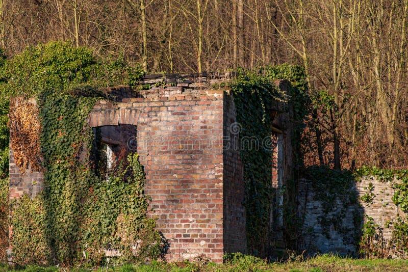 Ruína de uma casa coberto de vegetação com a hera fotografia de stock