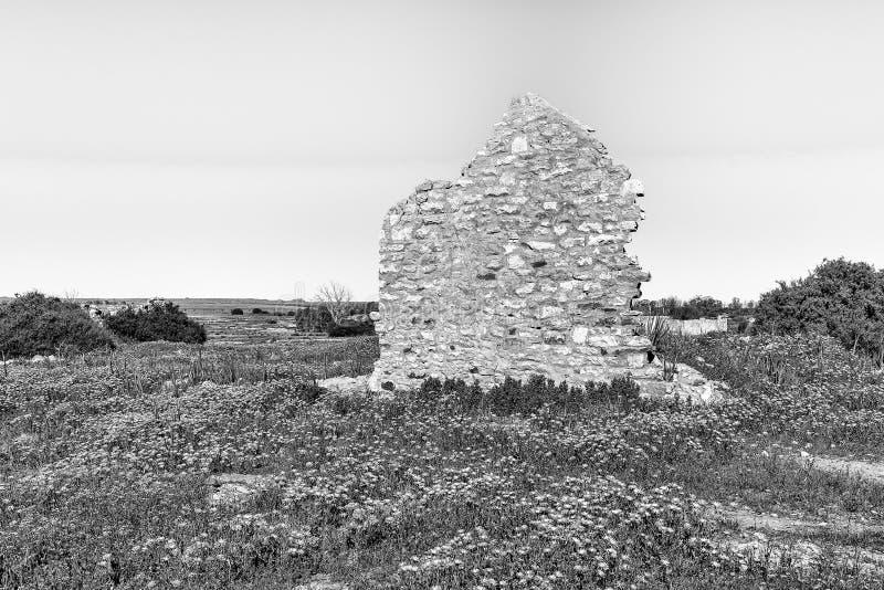 Ruína histórica e wildflowers em Groenrivier perto de Nieuwoudtville monocromático imagem de stock