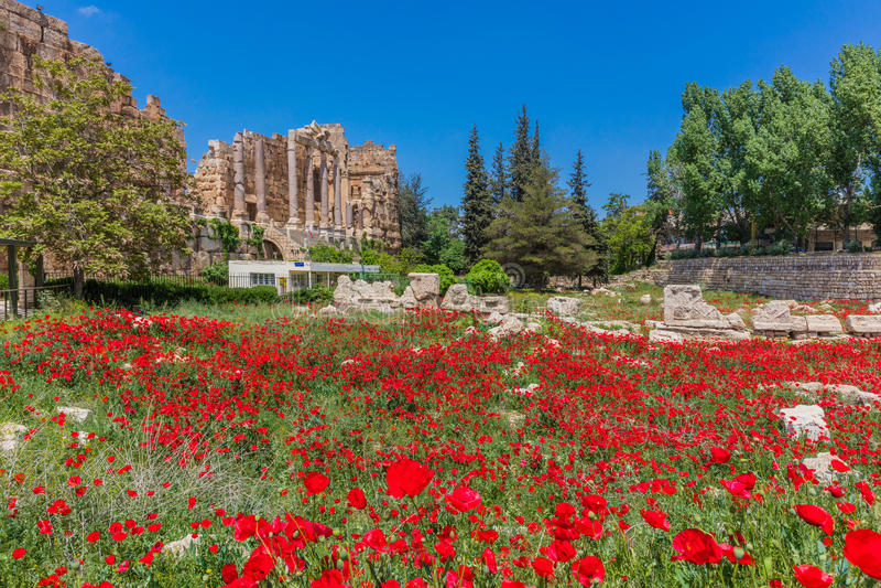 Ruínas Baalbek Beeka Líbano dos romanos do campo da papoila imagens de stock royalty free