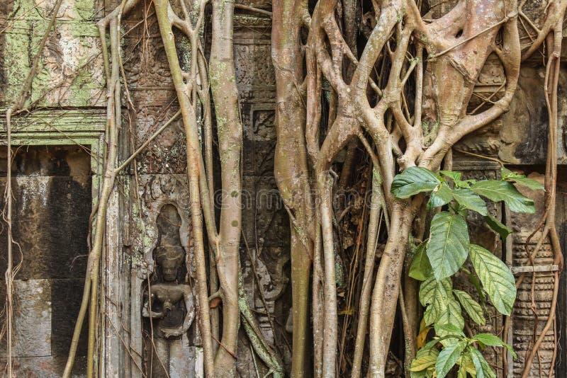 Ruínas cobertos de vegetação antigas do templo, Angkor Wat fotos de stock royalty free