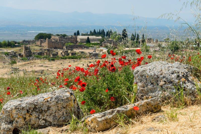 Ruínas da cidade greco-romana antiga Hierapolis com as flores de florescência da papoila, Pamukkale, Turquia Paisagem da natureza imagens de stock