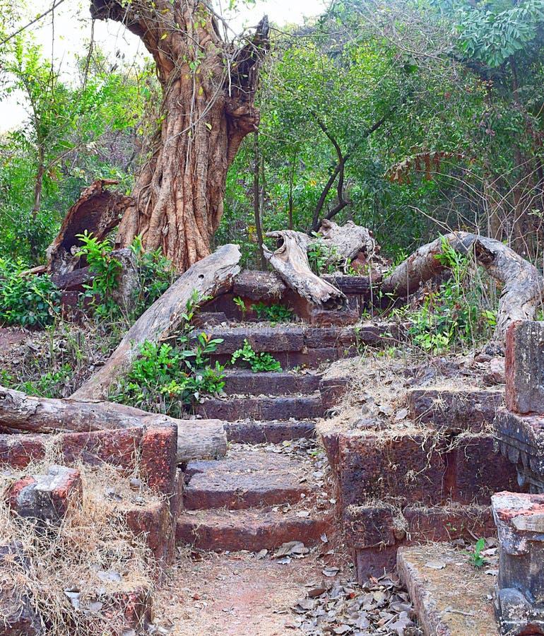 Ruínas da escadaria na floresta - a estrada obstruída imagens de stock
