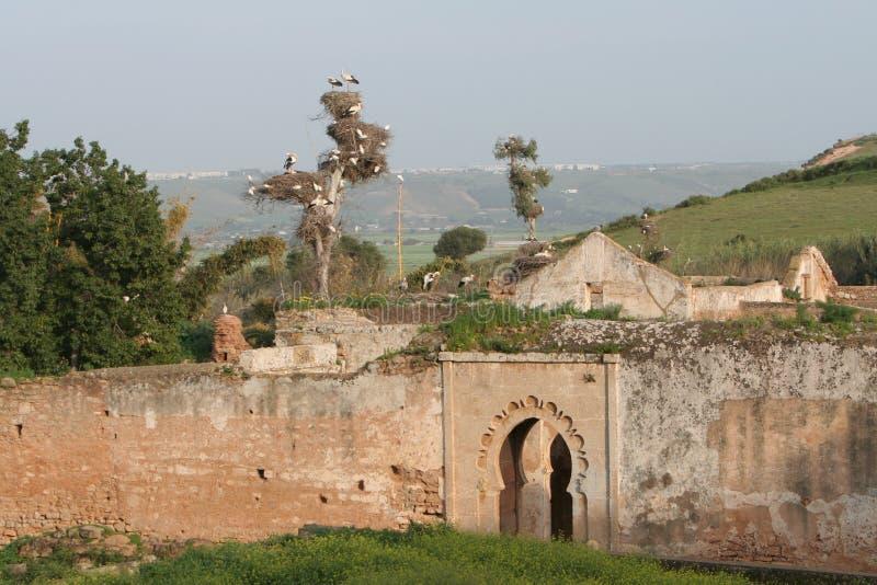 Ruínas de Cellah em Rabat com fotografia de stock royalty free