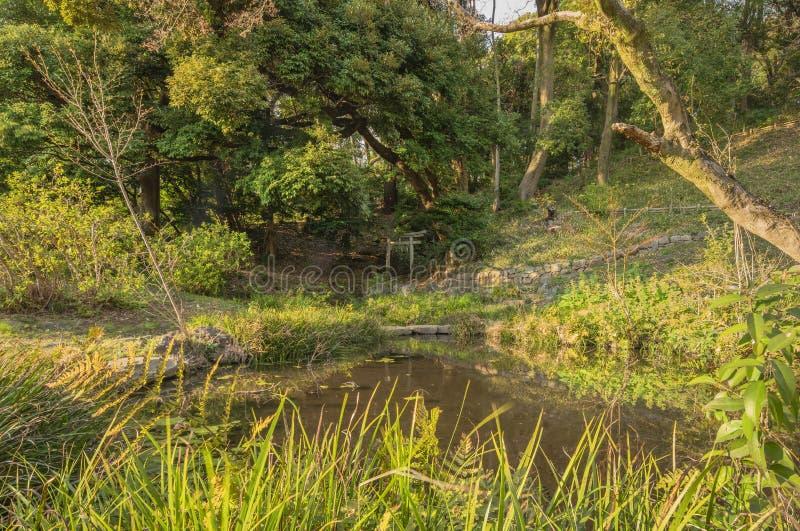 Ruínas de um antigo santuário de Torii, portão de pedra em frente a um lago na floresta imagem de stock royalty free