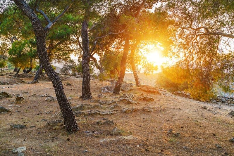 Ruínas do santuário de Poseidon, Grécia foto de stock