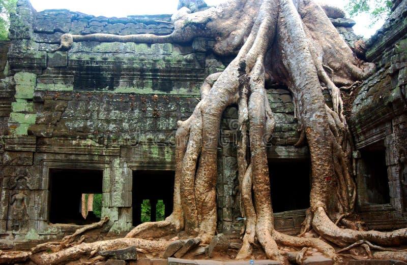 Ruínas do templo, wat de Angkor, Cambodia imagens de stock royalty free
