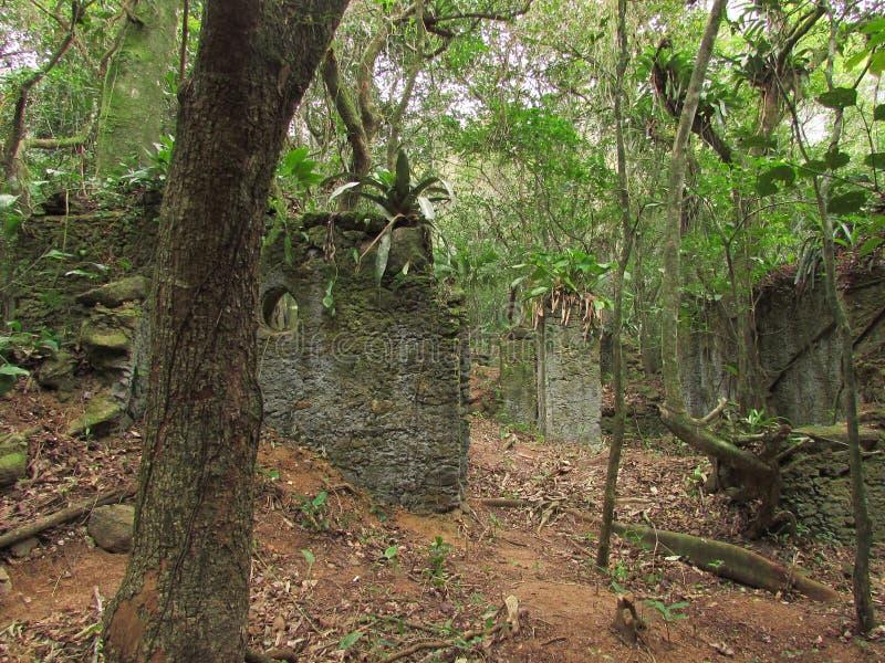 Ruínas na floresta foto de stock