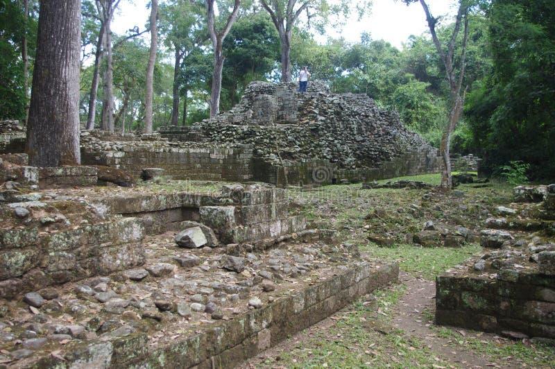 Ruïnes van Copan stock afbeeldingen