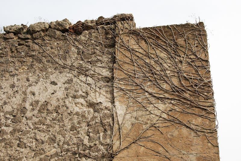 Ruïnes van een steenmuur door takken wordt behandeld te beklimmen die royalty-vrije stock foto's