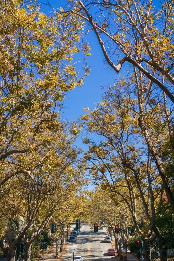 rua Árvore-alinhada em uma vizinhança residencial em um dia ensolarado do outono imagens de stock royalty free