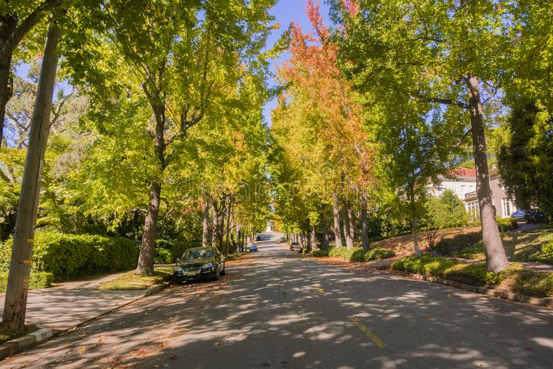 rua Árvore-alinhada em uma vizinhança residencial em um dia ensolarado do outono foto de stock