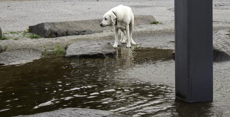 Rua abandonada do cão foto de stock