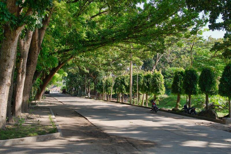 Rua cênico florestado com árvores de Acatia fotografia de stock royalty free
