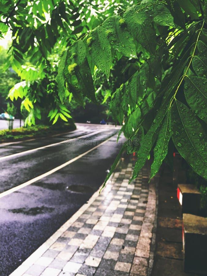 Rua chuvosa foto de stock