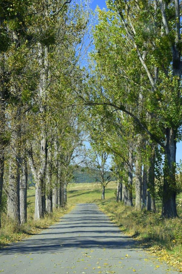 Rua com árvores alinhadas fotos de stock