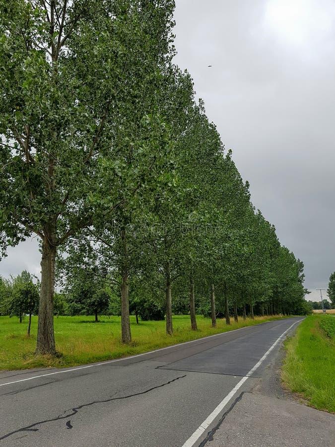 Rua com algumas árvores foto de stock royalty free