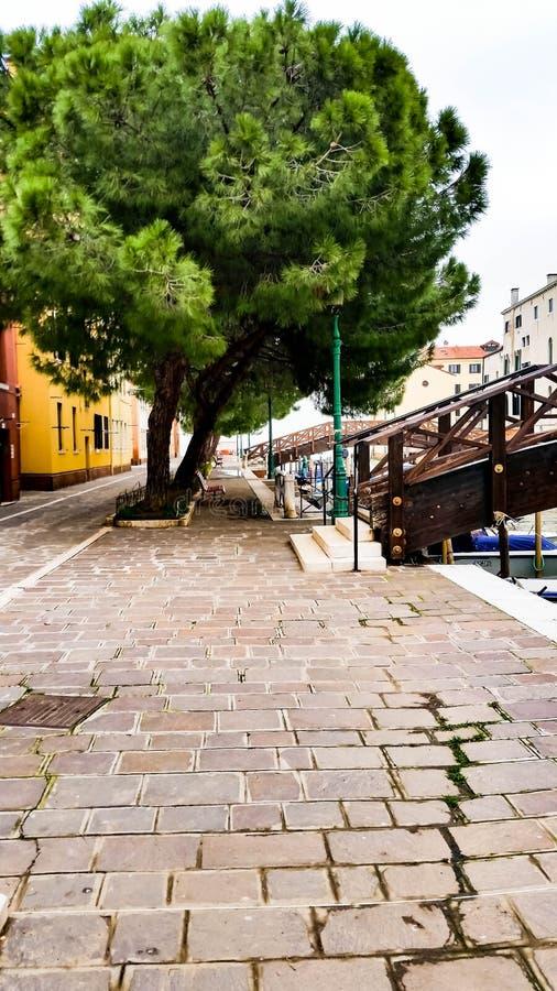Rua com as árvores grandes em Veneza fotografia de stock