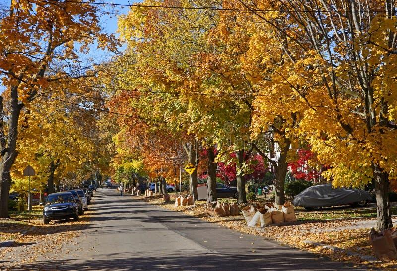 Rua com cores da queda imagem de stock