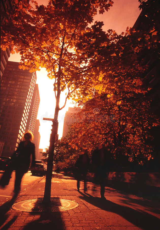 Rua de Montréal. foto de stock royalty free