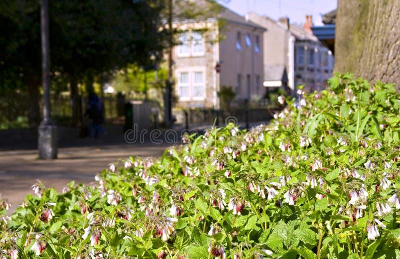 Download Rua urbana foto de stock. Imagem de rosa, flores, propriedade - 12805992