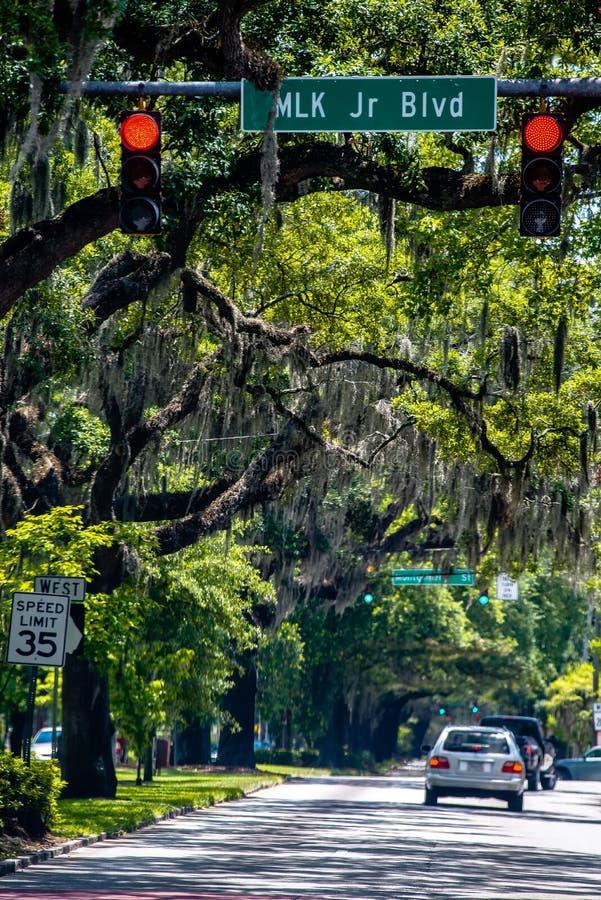 Ruas alinhadas carvalho de Savannah Georgia fotografia de stock royalty free