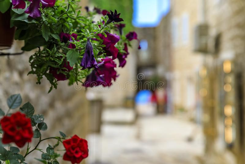 Ruas pitorescas da cidade velha Budva com uma vista das flores do mar e do bokeh de adriático no primeiro plano em Montenegro foto de stock