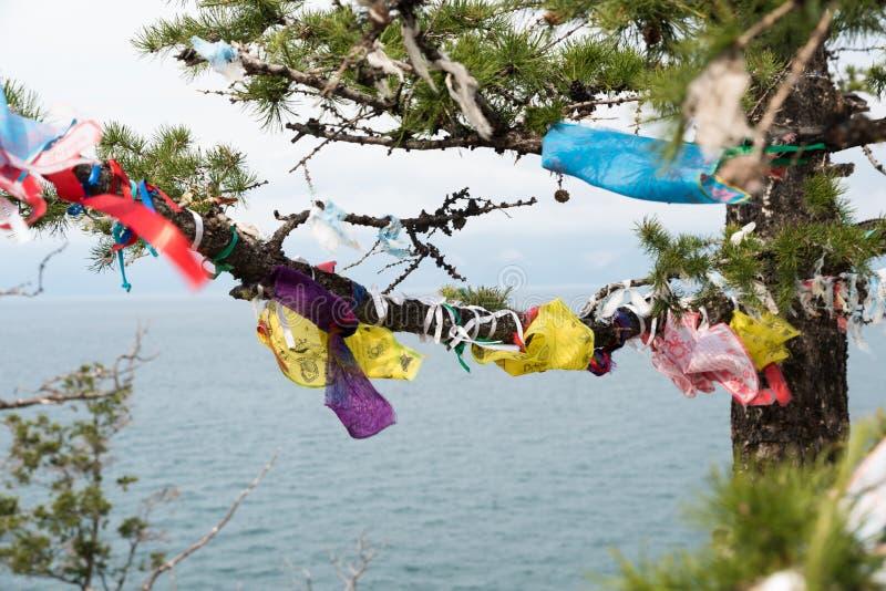 Rubans colorés sur l'arbre chez le lac Baïkal en Sibérie images libres de droits