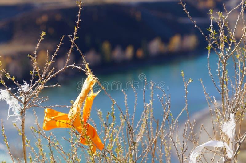 Rubans religieux de prière attaché à un arbre au confluent de Chuya photo stock