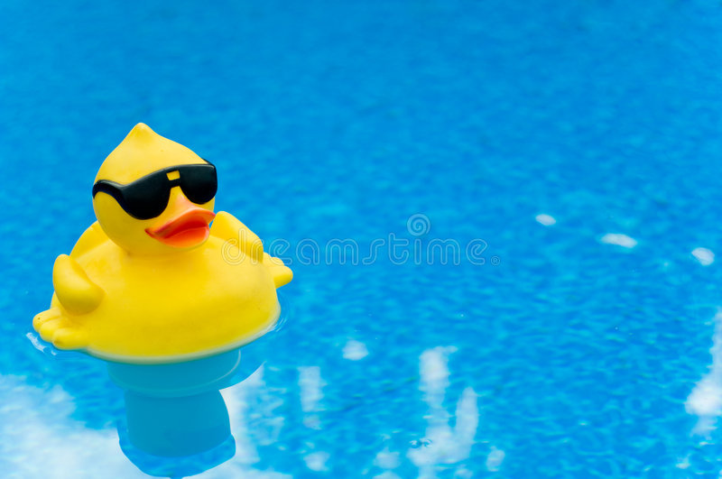 Rubber Duck on Blue. Yellow Rubber duck with shades on blue water, space for copy stock photography