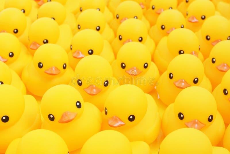 Rubber Duck. Close-up Shot of Rubber Duck stock photos