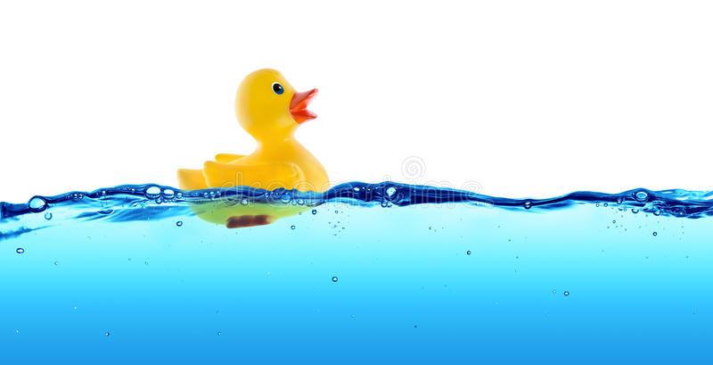 Rubber duck float. In water royalty free stock photo