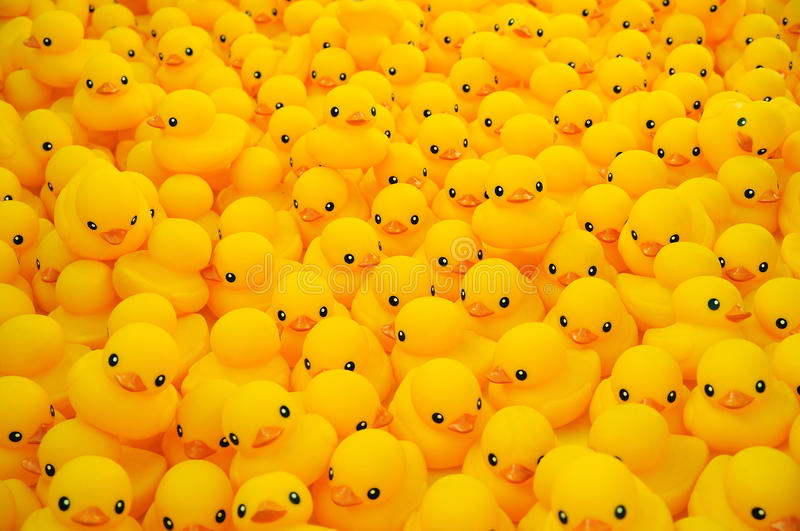 Rubber duck. Group of yellow rubber duck stock images